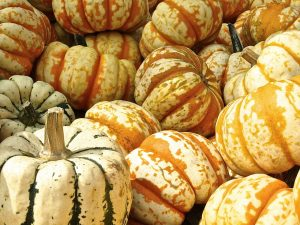 pumpkin, gourd, decoration